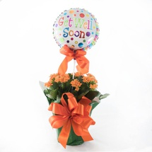 Kalanchoe Plant with Balloon